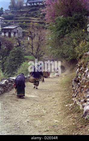 Nepalese women cleaning and sweeping footpath between Sikha and Ghorapani on Annapurna circuit Himalayas Nepal - Stock Image