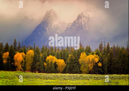 Cottonwood trees in fall color with storm and Teton Mountains. Teton National Park, Wyoming - Stock Image