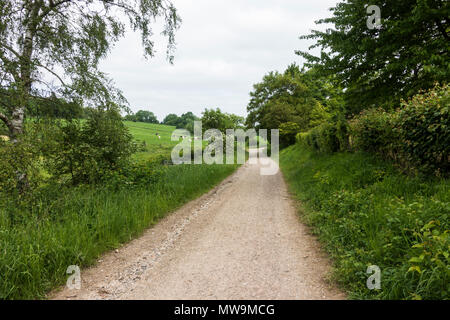 Sunken lane, hollow way or holloway in countryside, South Netherlands, Limburg, Netherlands. - Stock Image