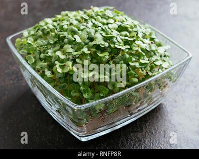 Broccoli Raab (Brassica rapa var. cymosa) sprouts - Stock Image