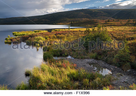 Denali national park - Alaska - Stock Image
