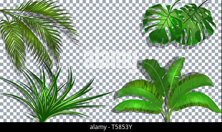 Set. Green leaves of banana, coconut, monstera and ogawa. Tropical . On a transparent background with a shadow. illustration - Stock Image