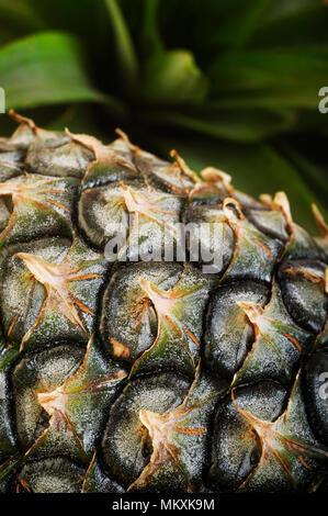 fresh pineapple fruit background - Stock Image