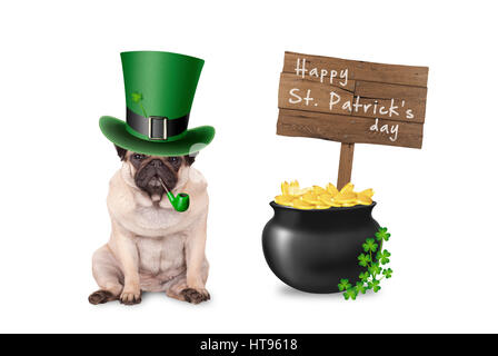 cute pug puppy dog with st. patrick's day hat and pipe sitting next to pot with gold, wooden sign and shamrock - Stock Image