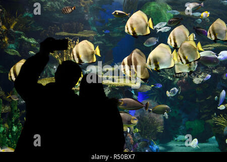 Couple taking a selfy in front Rainbow Reef aquarium Indo-Pacific coral reef with watching school of Batfish - Stock Image