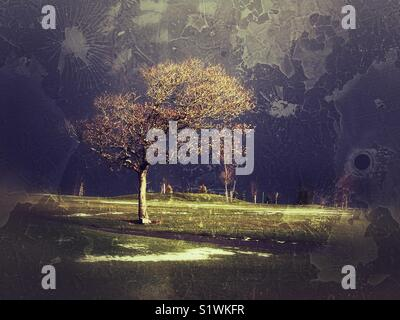 Lone tree on golf course - Stock Image