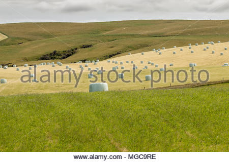 Bales of hay on a field, New Zealand countryside - Stock Image