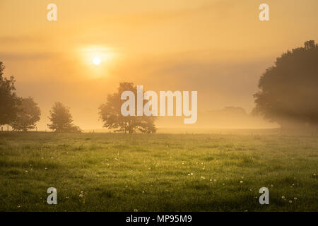 Foggy morning on the sunny green meadow with the silhouettes of trees. - Stock Image