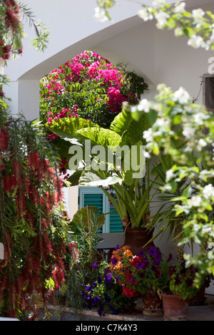 Portugal, Algarve, Alte, Colourful Flowers - Stock Image