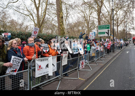 London, UK. 26th January 2019. London protest against the resumption of whaling by Japan.The Japanese government recently backed out of an international agreement banning commercial whaling. Campaigners marched through central london to the Japanese Embassy. Pictured here outside and opposite the Japanese Embassy. Credit: Stephen Bell/Alamy Live News. - Stock Image