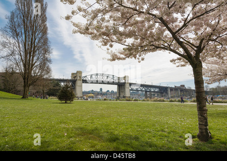 A cherry blossom tree frames the Burrard Street Bridge, Vancouver, BC, Canada - Stock Image