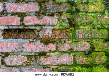 Half green half brown brick wall partly covered with moss and one brick missing- texture or background - Stock Image