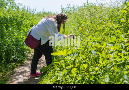 Woman taking photos of plants and other flora in the countryside using a compact camera in Summer in the UK. - Stock Image