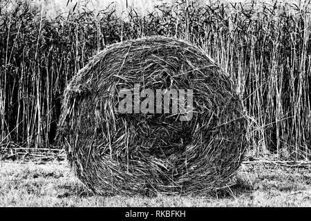 Round hay bale - Stock Image