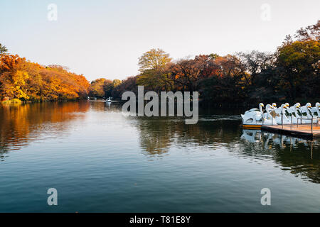 Inokashira Park pond and autumn maple in Tokyo, Japan - Stock Image