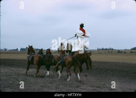 Horses performing in the Puszta, Hungary.  Excellent horsemanship of the people in the Puszta. The Puszta is the - Stock Image