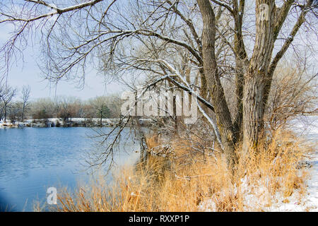 A winter landscape consisting of a lake, dead grasses, snow and trees. Wichita, Kansas, USA. Sedgwick County park. - Stock Image