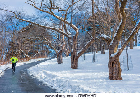 Running in winter past Japanese cherry trees in High Park in Toronto Ontario Canada - Stock Image