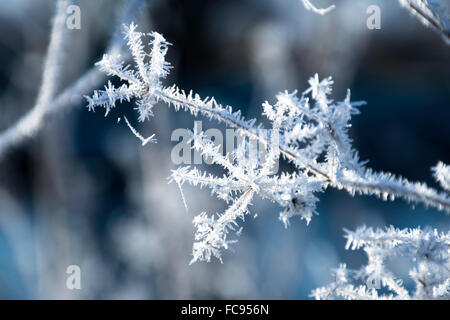 Frosted Plant - Stock Image