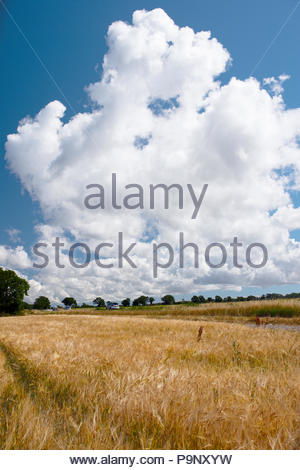 Majestic summer clouds on blue sky. Dry grass in summer 2018 - Stock Image