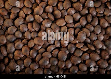 roasted sacha inchi seeds background - Stock Image