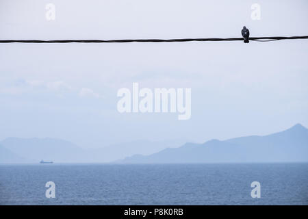 Bird sat on a power line looking at the Aegean sea with the Sardonic Islands in the background with a cargo ship sailing , East Attica, Greece, Europe - Stock Image