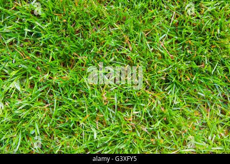 Green grass - Stock Image