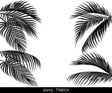 Set of black and white tropical palm leaves. Isolated on white background illustration - Stock Image