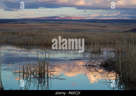 Wetlands at Dusk - Stock Image
