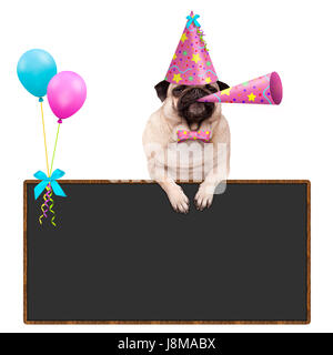 adorable pug puppy dog hanging with paws on blank blackboard sign with balloons and wearing pink party hat, isolated - Stock Image