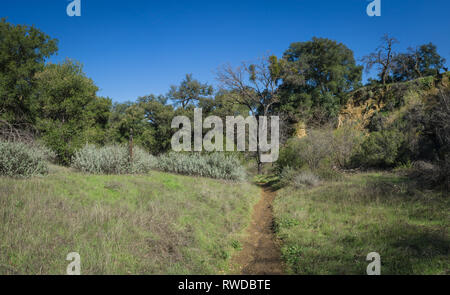 Muddy dirt trail in the green wilds of southern California hills. - Stock Image