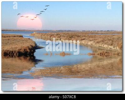 Marshy lake with birds and reflection - Stock Image