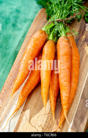 Bunch of fresh orange summer carrots, new harvest of healthy vegetables close up - Stock Image