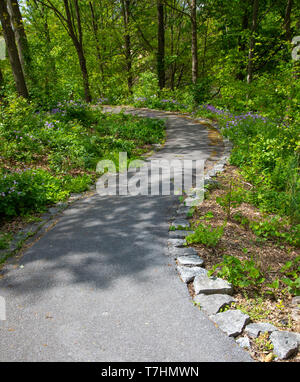 A serpentine (S-shaped) paved walkway, bordered by rock and purple wildflowers, through a wooded park. - Stock Image
