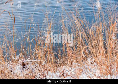 Dead grasses at the edge of a lake after a winter snowfall. Kansas, USA - Stock Image