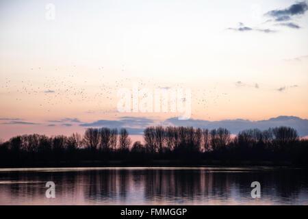 Birds settling in the trees - Stock Image