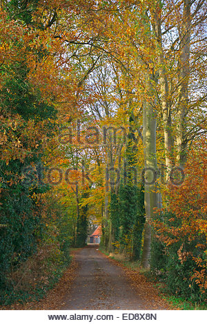 Remote farmhouse down a country lane flanked by Buche (Beech) trees in Lower Saxony, Germany. - Stock Image