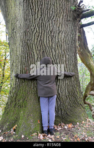 Rear view of a boy hugging a tree in Dinefwr Park woodland on his way to visit Dinefwr Castle  Llandeilo Carmarthenshire South Wales UK  KATHY DEWITT - Stock Image