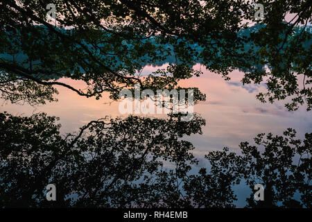 Idyllic silhouetted tree reflection in placid lake at sunset, Luetjensee, Schleswig-Holstein, German - Stock Image