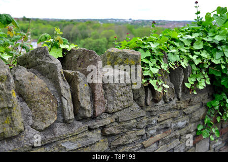 British Stone wall with traditional toppers capping stones with ivy growing over part - Stock Image