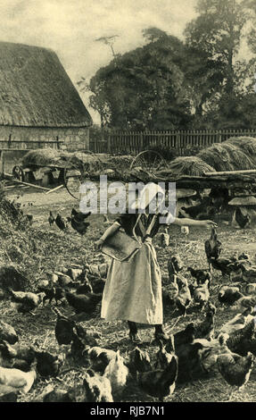 Dairymaid feeding chickens in the stackyard, on a farm in the Isle of Wight. - Stock Image