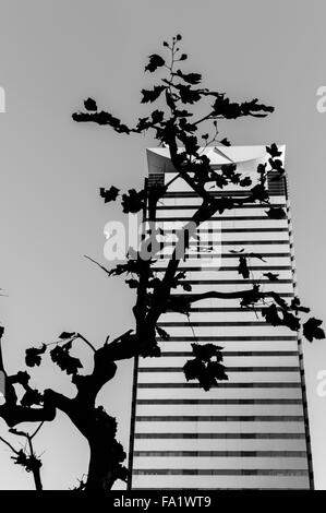 Silhouette of a tree in front of an office building with the moon - Stock Image