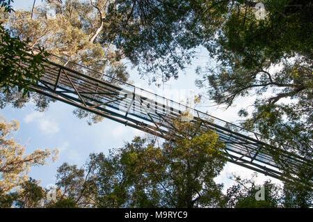 Tahune AirWalk, Tahune Forest Reserve, Geeveston, southern Tasmania - Stock Image