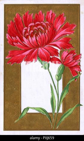 Red Spray Chrysanthemum set above decorative gold border.     Date: 1906 - Stock Image