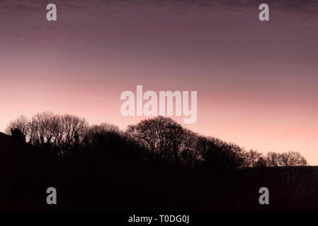 Trees silhouetted against the colourful sky at daybreak in the Dorest countryside. - Stock Image