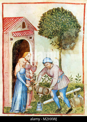 'Tacuinum Sanitatis', Olive Oil - Stock Image