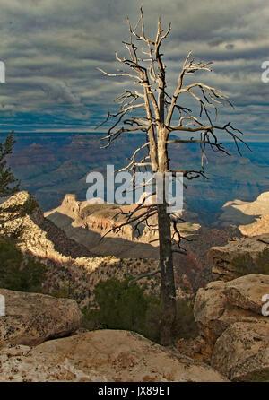 Evening scenery in Grand Canyon, Arizona with illuminated tree. - Stock Image