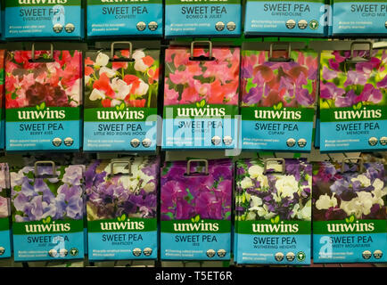 A display of flower seeds for several varieties of Sweet Pea in a garden centre - Stock Image
