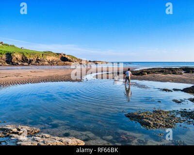 8 June 2018: Bovisand, Plymouth, Devon, UK - Boy playing with dog at Bovisand Beach at low tide, with clear blue sky. - Stock Image