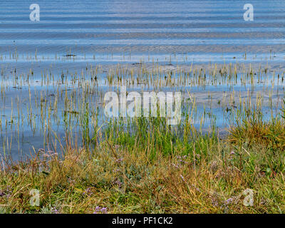 Ripples on water on a marshy bank - Stock Image